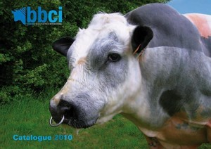 BBCI (Belgian Blue Cattle International) - Fotogalerij