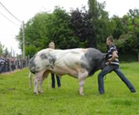 BBCI  - Centre d'insémination artificielle pour bovin